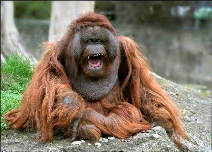 Забавные обезьяны