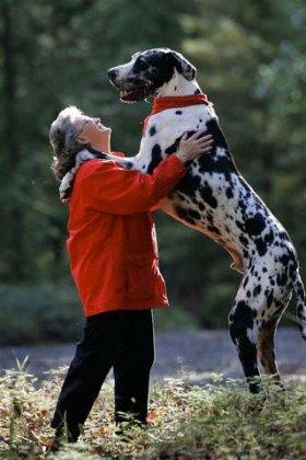Самая рослая собака в мире