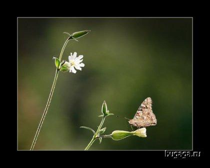 любителям бабочек посвящается =)