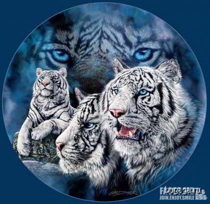 Найди 12 тигров