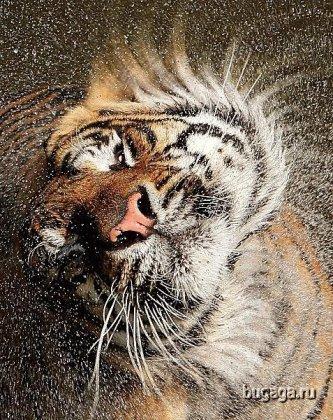 В мире животных. Красивые фото