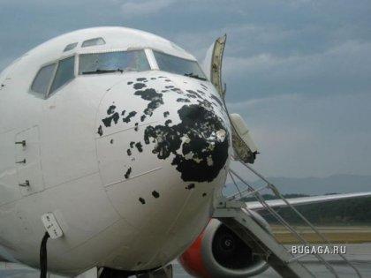 Самолет повстречал стаю птиц