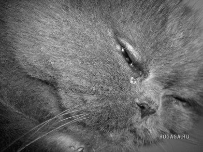 Чёрно белые фото животных