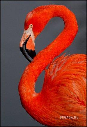 Фламинго, 7 фото