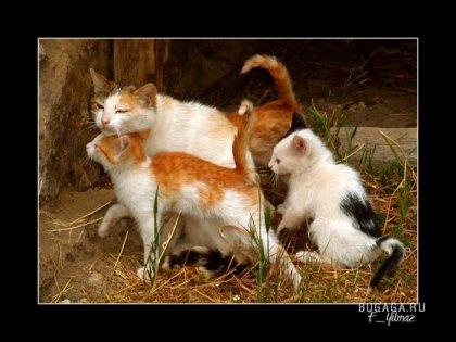 Подборка животных