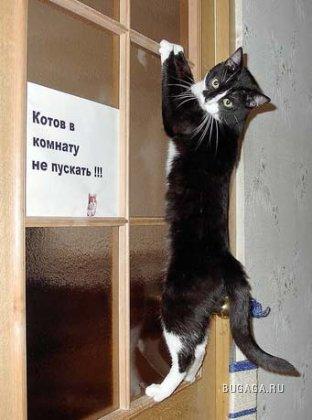 Подборка котов. ФОТО-позитив