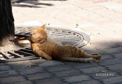 У котов тоже бывает пятнеца