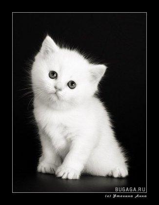 Классные фотографии котят (45 штук)