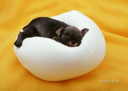 Супер-фотографии щенков