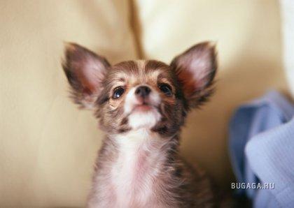 Супер-фотографии щенков(продолжение)