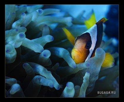 Подводный мир!
