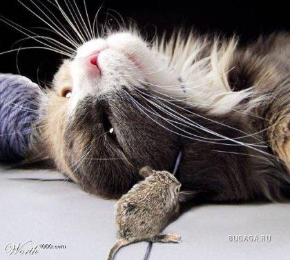 Мыши против котов