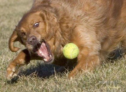 Собачий теннис. Немного позитива )