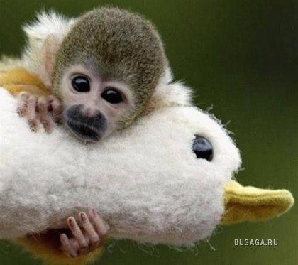 Забавные фотки животных