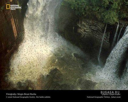 Фотографии от National Geographic(часть 2)