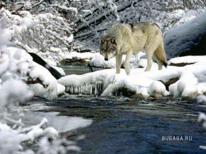 Зимние звери