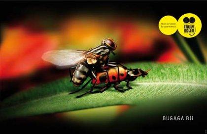 Совершенно дикий секс жуков в невероятных позах