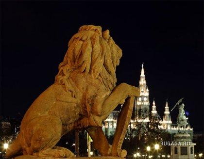 Ночная Вена.