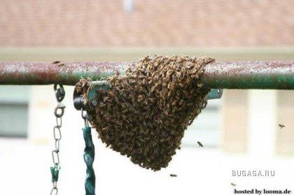 Как избавится от пчёл? >> Не повторять! <<