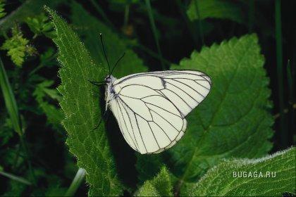 Самие красивые бабочки!