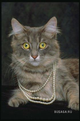 для любителей кошек