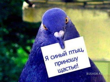 Картинки :-)