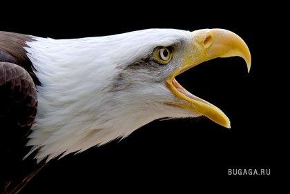 Лучшие фото - животные и природа