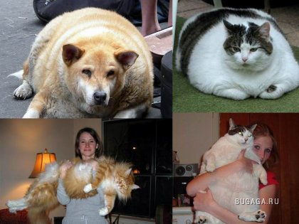 Очень толстые животные