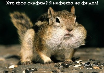 Грызуны))
