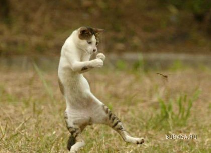 Смешные стоп-кадры с животными
