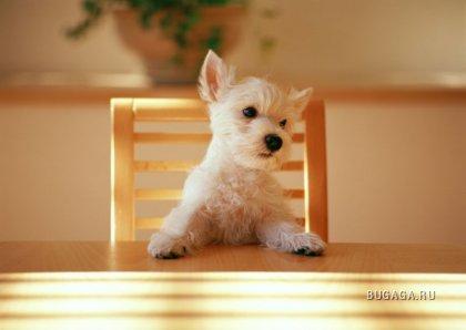 Фотографии щенков
