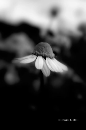 Sad and alone flowers by Natalie MORARU