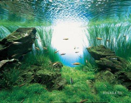 Мини-океан у тебя дома...)))