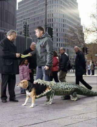 Собачий костюмчик!