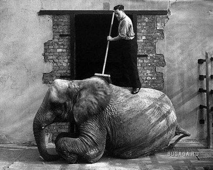 Лондонский зоопарк.Фоты прошлого века!