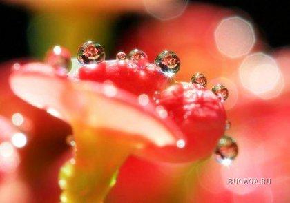 Свежая роса
