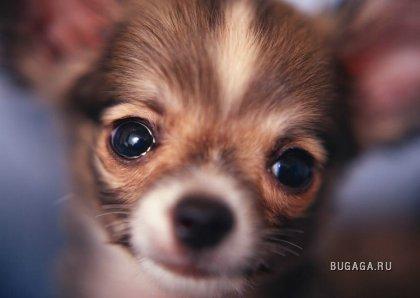 Позитивные собачки :)