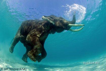 Великолепные фотографии природы и животных, победители конкурса Shell Wildlife Photographer