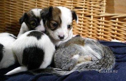 Собака усыновила бельчонка)))))