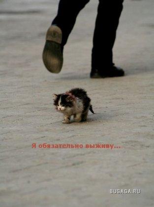 Сумбур...
