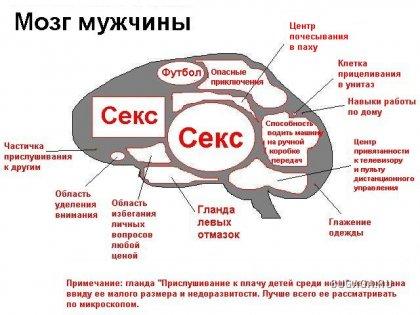 Из чего состоит мужской мозг