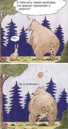 медвед и заяц