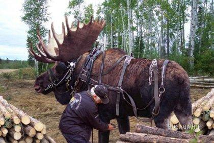 Большие животные