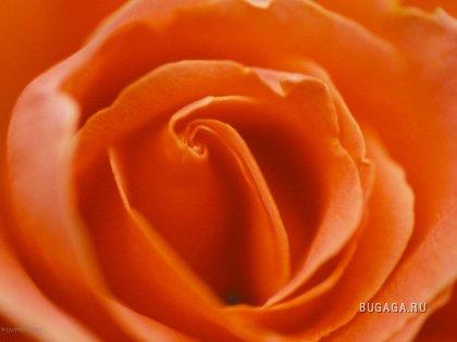 Цветочки, 13 фото