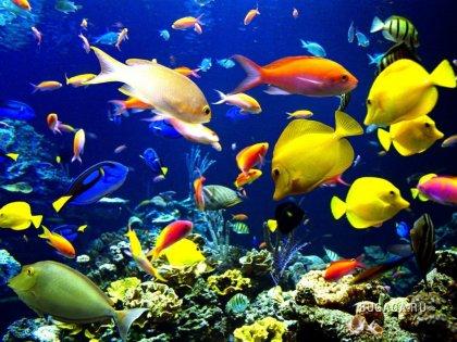 Подводный мир...