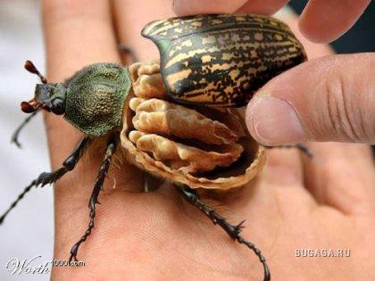 http://images.bugaga.ru/posts/thumbs/1199399769_20050821192854_164781qvxu_w.jpg