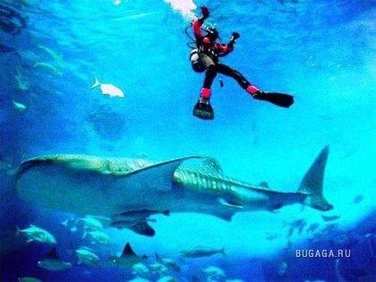 Гигантский аквариум в Окинаве потрясает воображение