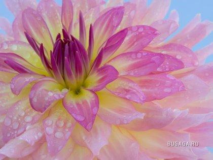 скачать картинки на рабочий стол красивые цветы № 260601 бесплатно